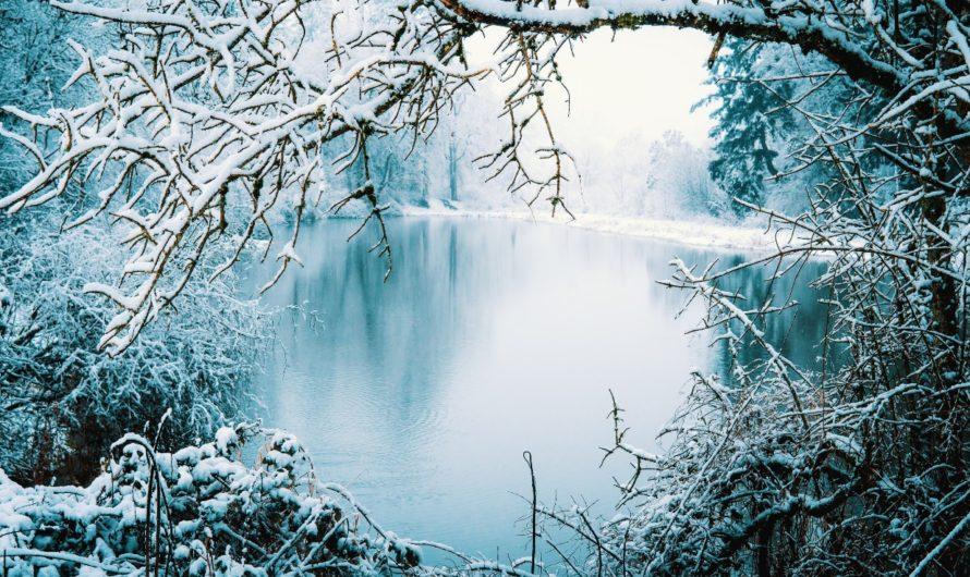 Que faire pour entretenir son bassin en période hivernale.